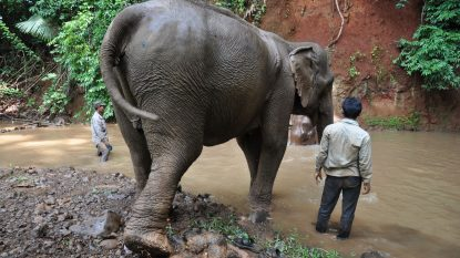 Elephant Valley Project Cambodia 1