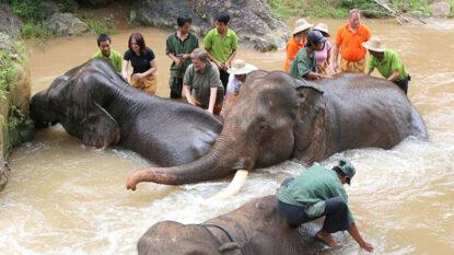 Green Hill Valley Elephant Camp Hanuman Travel 814X458
