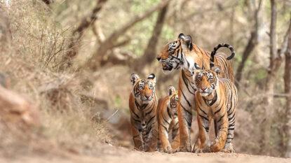 Hukaung Valley Tiger Reserve Hanuman Travel 814X458